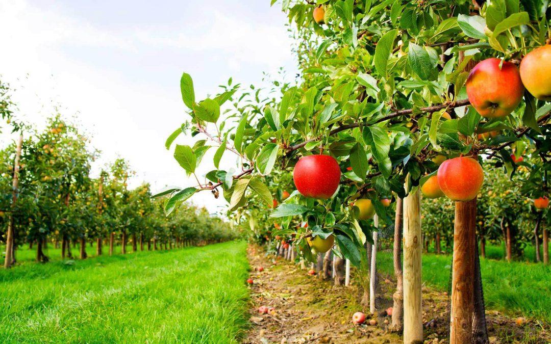 100.000 euro nerambursabili pentru entitati din sectoarele agricol și pomicol – PNDR 16.4, 16.4a